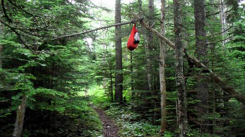 hanging-food