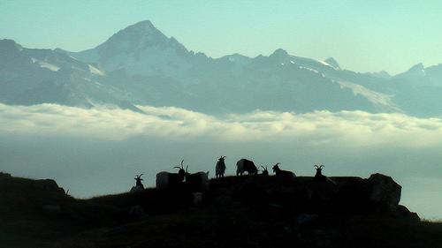 goats-Europa-Weg
