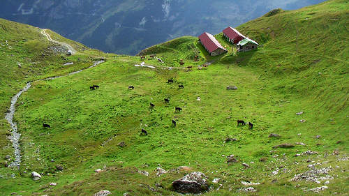 Swiss-farm