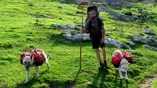hiking-dogs