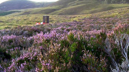 tent-purple-heather