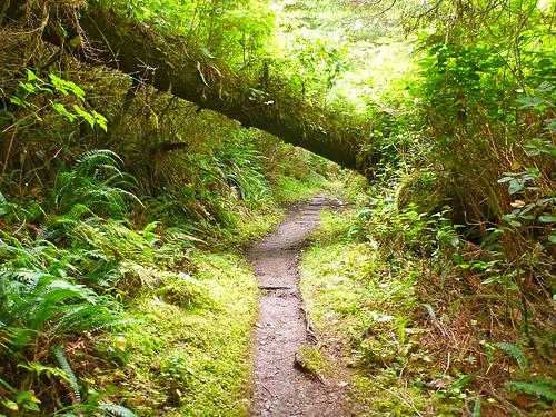 cape scott trail 2