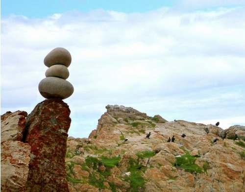 bird rock