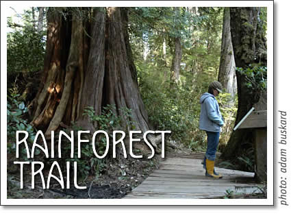 pacific-rim-national-park-rainforest-trail