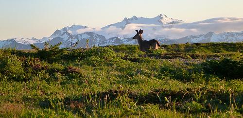 deer Olympic