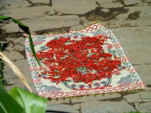 chilis - Kuari day 3