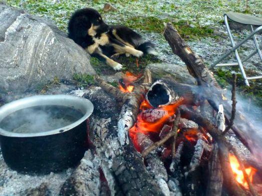 dog warming up - Kuari day 6