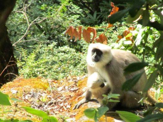 first monkeys - Kuari day 3