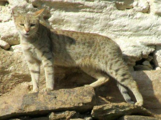 house cat - Kuari day 3