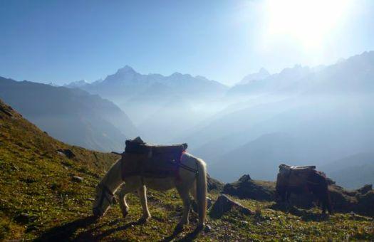 pack mule - Kuari day 6