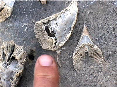 Proof the Rockies were once under the sea. horn coral, easily found between the lodge and Wonder Pass.