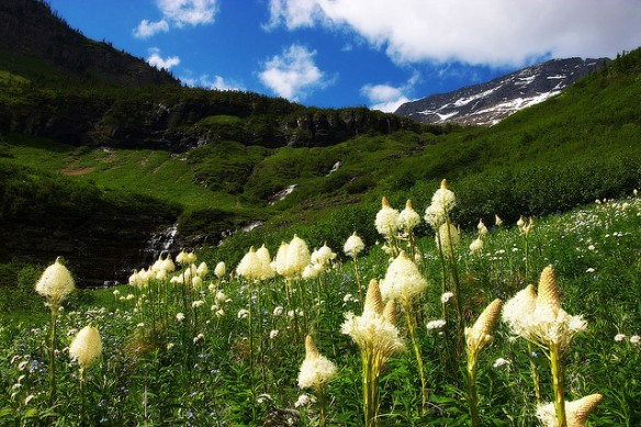 Bear Grass by paribus