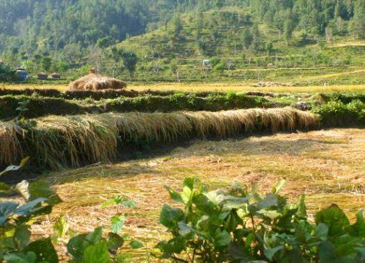 farm Nepal
