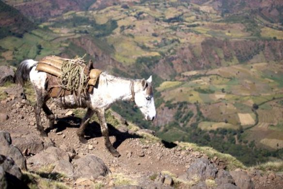 Simien - Josh and Nadine horse