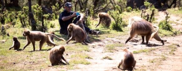 Simien - Rick baboons 600