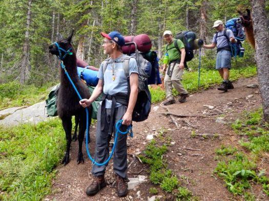 lama trekking