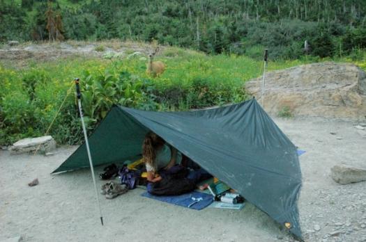 glacier-np-campsite-615x408