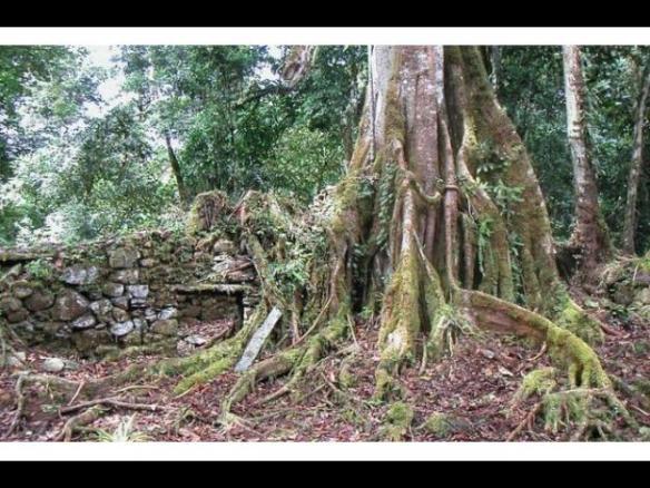 jungle at Vilcabamba