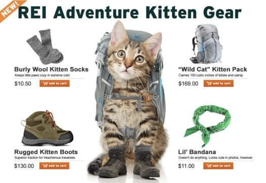 Kitten hiking gear
