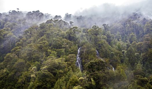 temperaterainforest-chile.jpg.990x0_q80_crop-smart