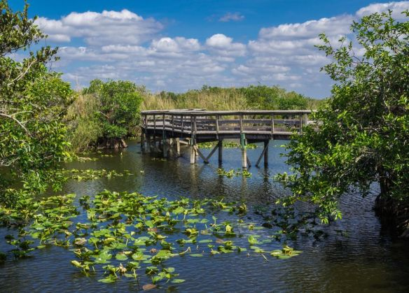 boardwalk-trails-everglades.jpg.990x0_q80_crop-smart