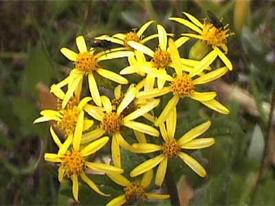 008_flower_yellow