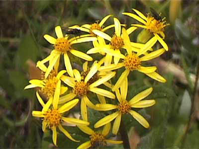 008_flower_yellow