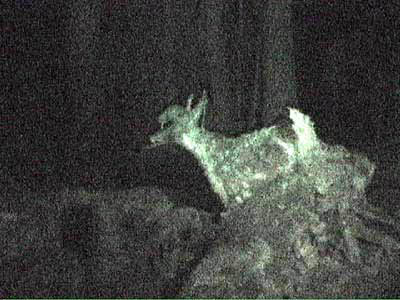 023_deer