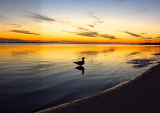 sunset-pensacola