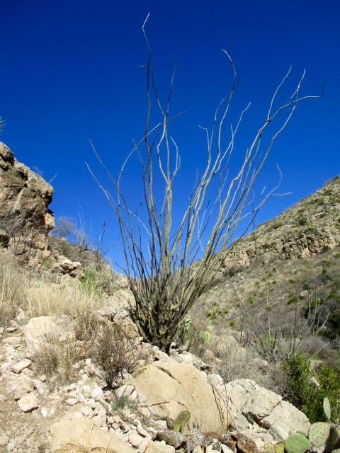 Rattlesnake Canyon, New Mexico