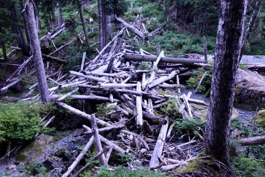 hiking Elk Pass, Strathcona Park B.C. 37
