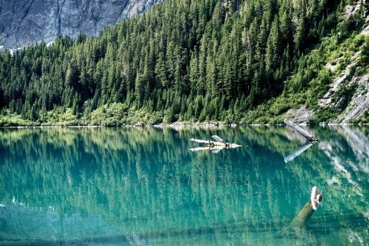 Elk River trail to Landslide Lake, Strathcona Park B.C. 75