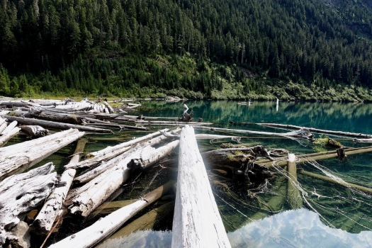 Elk River trail to Landslide Lake, Strathcona Park B.C. 76