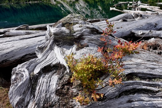 Elk River trail to Landslide Lake, Strathcona Park B.C. 77