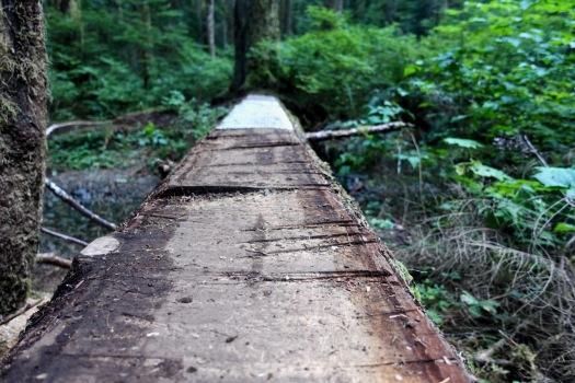 Elk River trail to Landslide Lake, Strathcona Park B.C. 64
