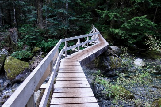 Elk River trail to Landslide Lake, Strathcona Park B.C. 67
