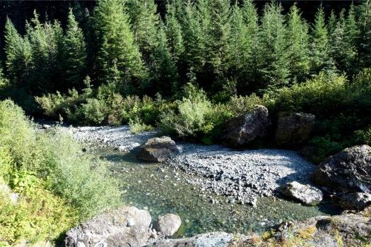 Elk River trail to Landslide Lake, Strathcona Park B.C. 68