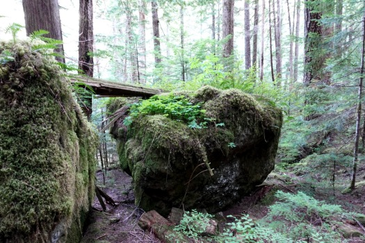 Elk River trail to Landslide Lake, Strathcona Park B.C. 62